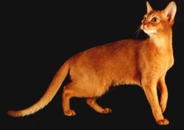 'Meow, meeeeoooooow' the little red-auburn kitty-cat chimed in.
