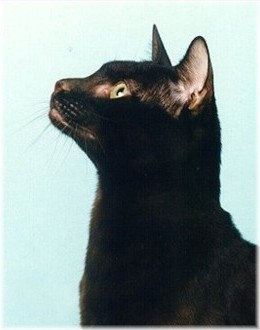 'Me-o,' the little brown-black kitty-cat chirped.